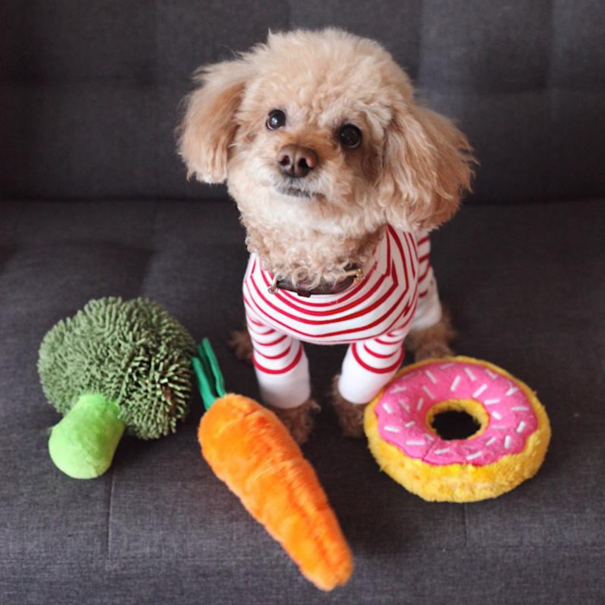 Make sure you choose a healthy diet for your pup.
