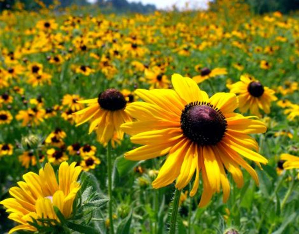 Flowers in a field.  An example of Realist art?