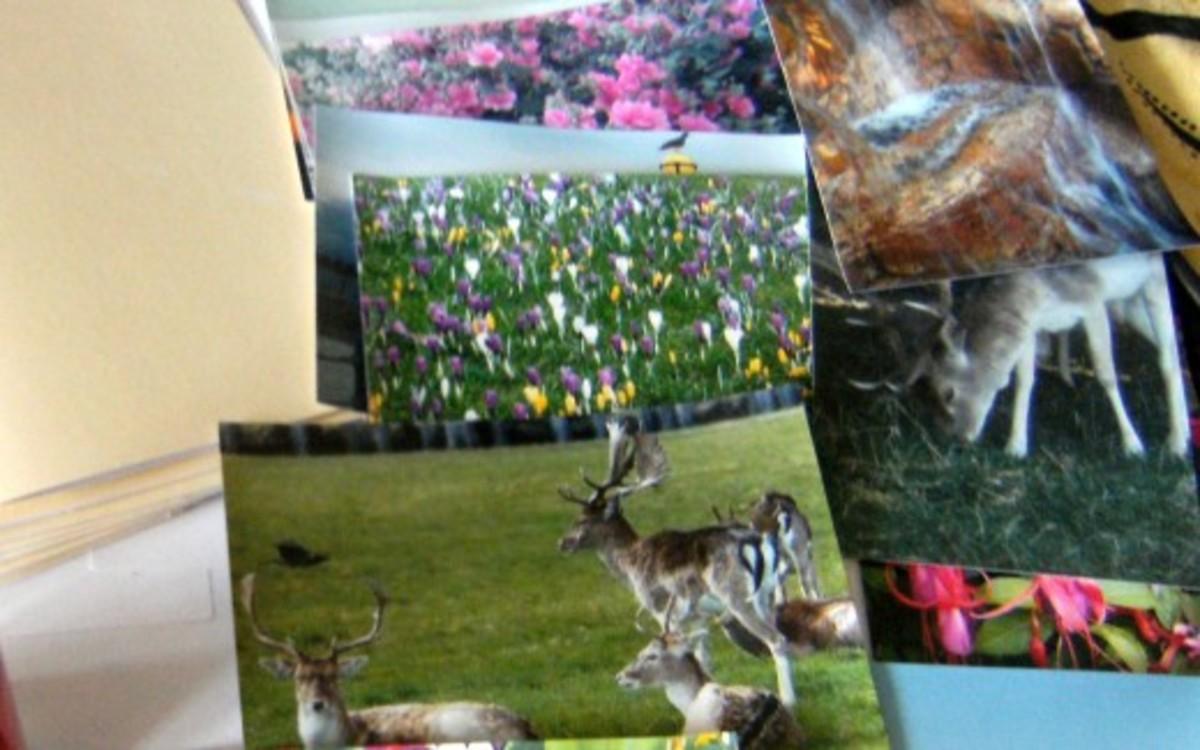A Selection of Photos