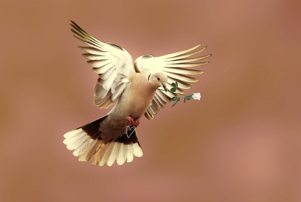 my-special-dove-1