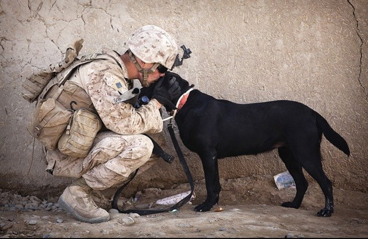 Soldier kissing dog