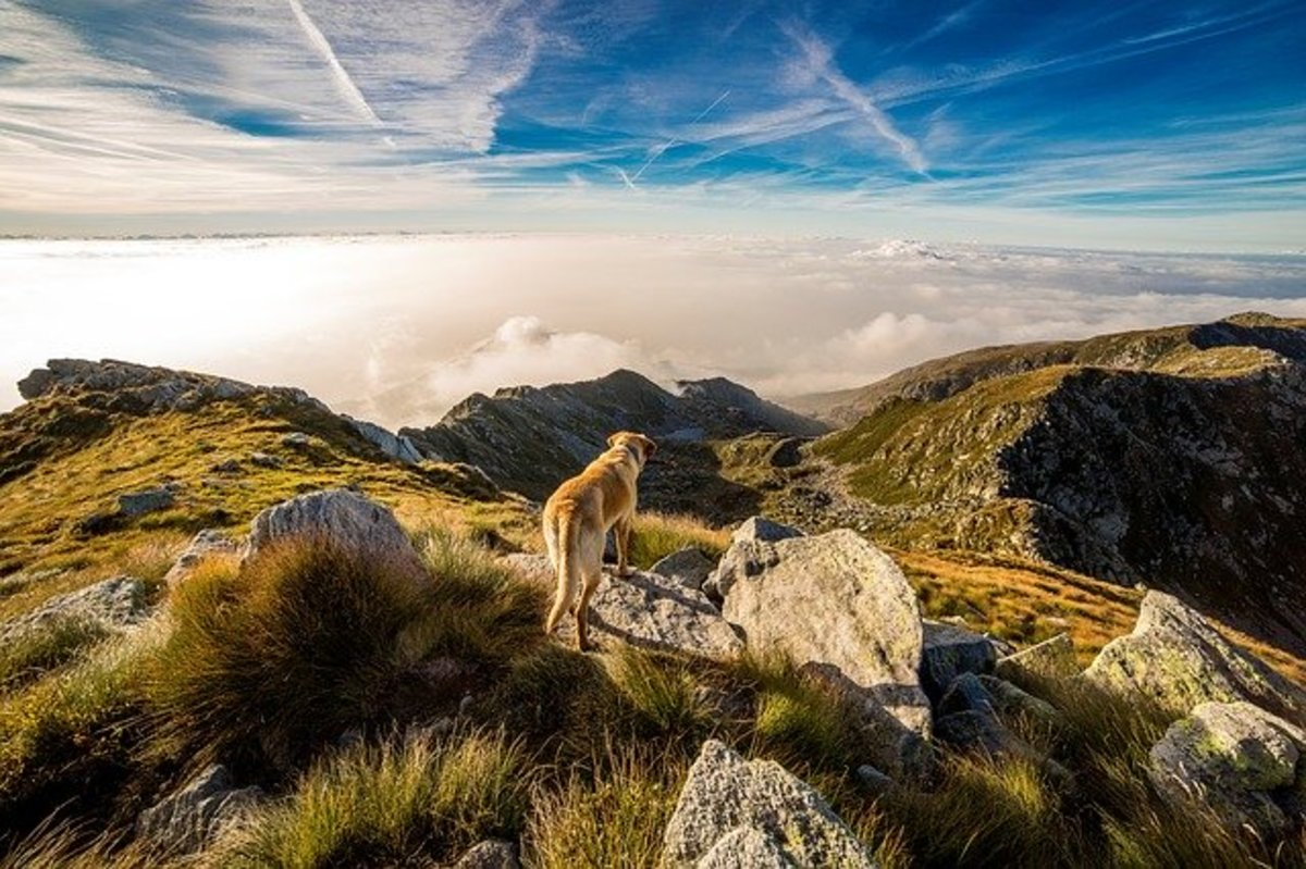Dog looking across mountains