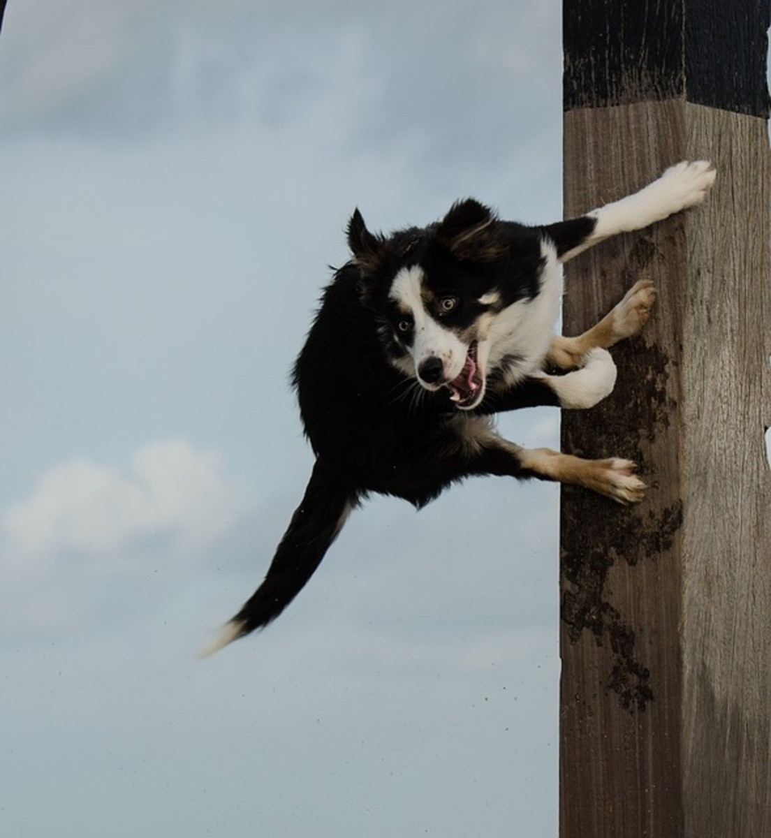 Dog jumping off pole