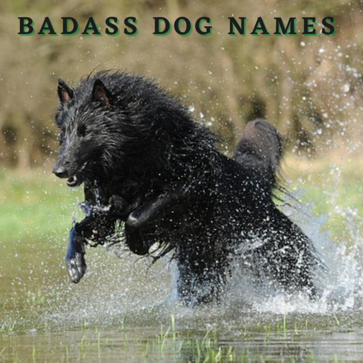 300+ Badass Dog Names (With Definitions) for Your Pup