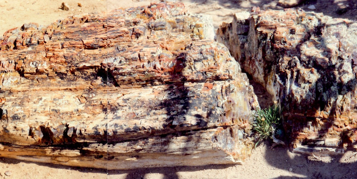 Petrified wood in the state park