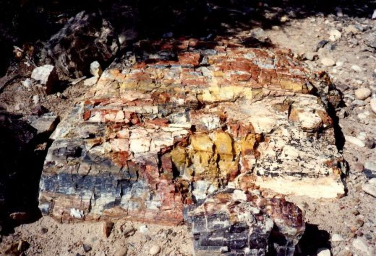 Beautiful colors in the petrified wood located in Escalante Petrified Forest State Park