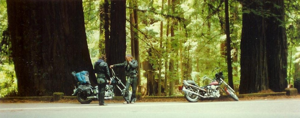 Harleys and Redwood Trees