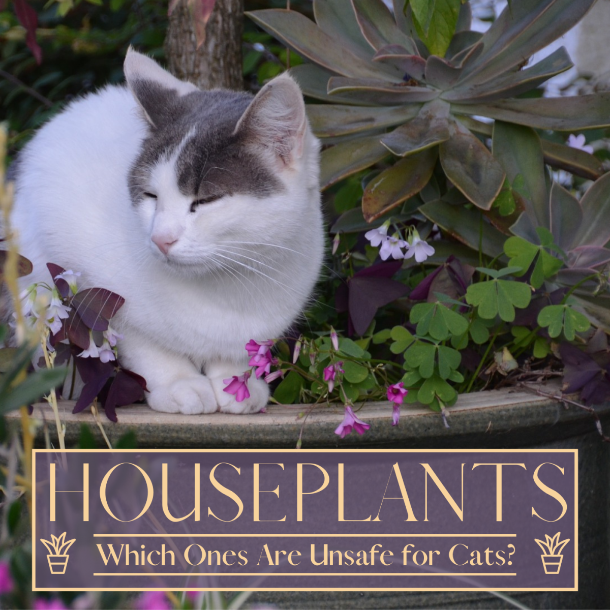 Many common houseplants can be poisonous to cats. Learn which ones to avoid to keep your pets safe.
