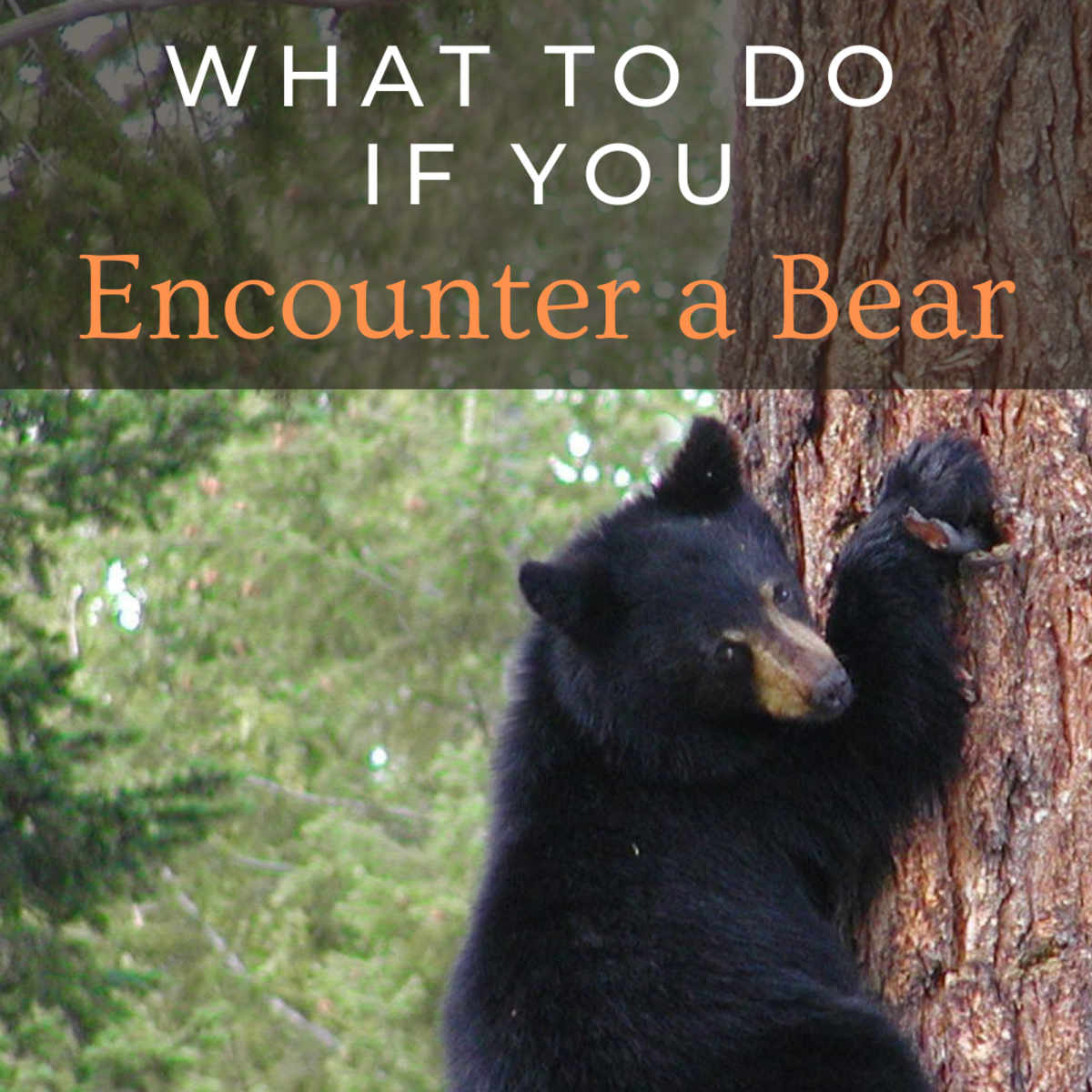 What to Do If You Encounter a Bear and How to Stay Safe