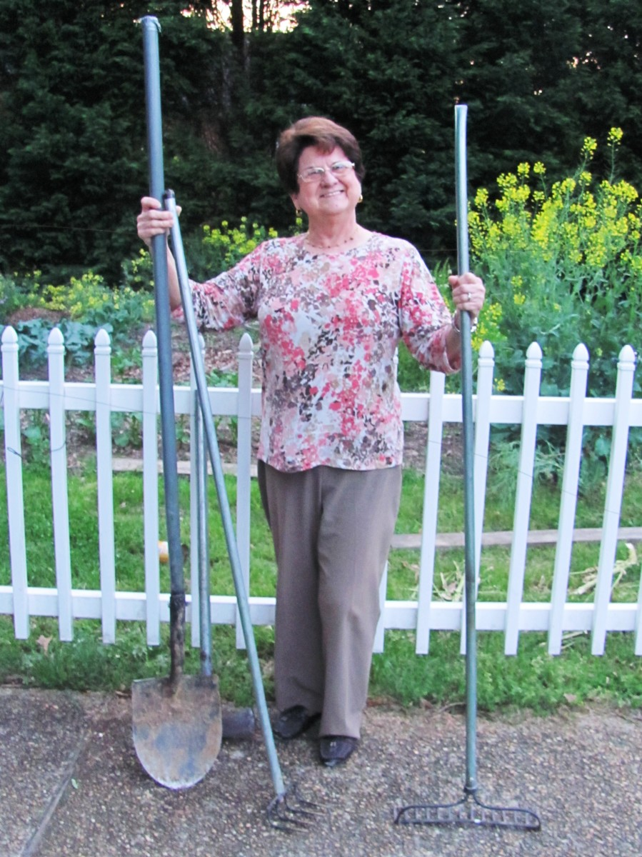 Short lady, long-handled yard tools.  My mom is not a Frugal Engineer herself, but she plays along.  These refurbished yard tools are a bit tall and heavy for her, but no matter.