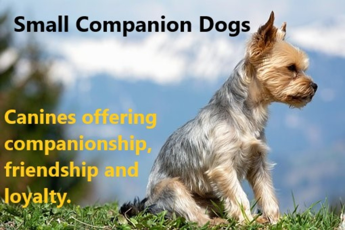 We all seek companionship, and dogs are no different in this regard. They are social animals who will try to find their place within your family. | Source