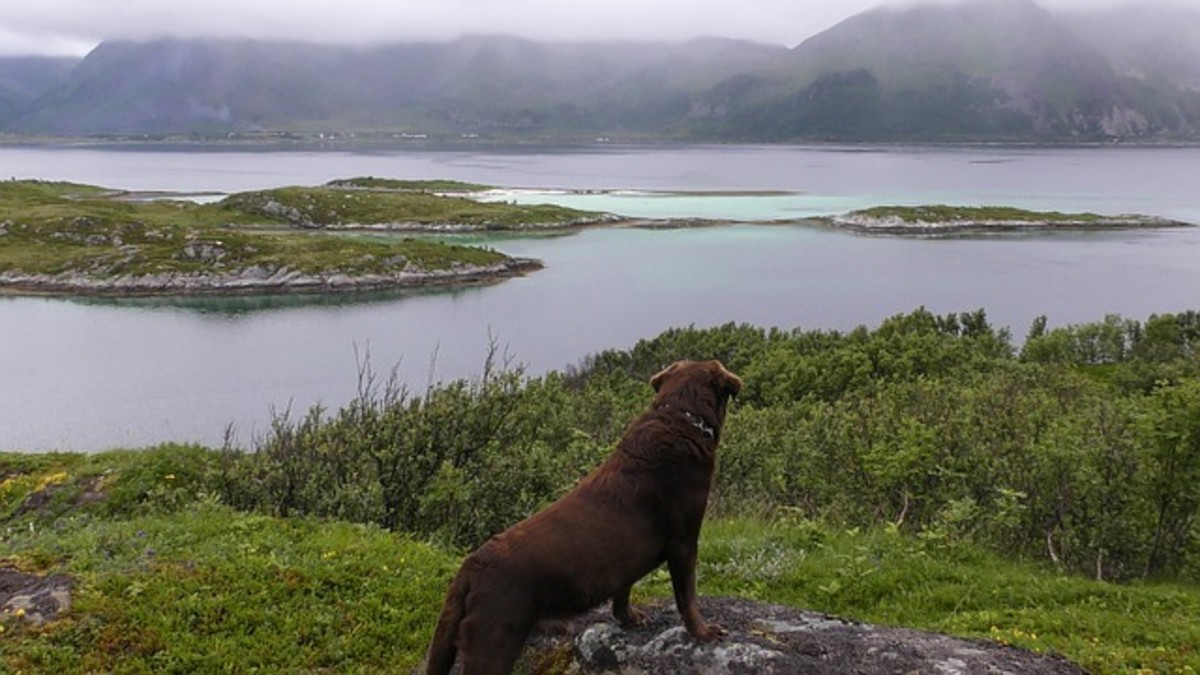 Dog in Norway