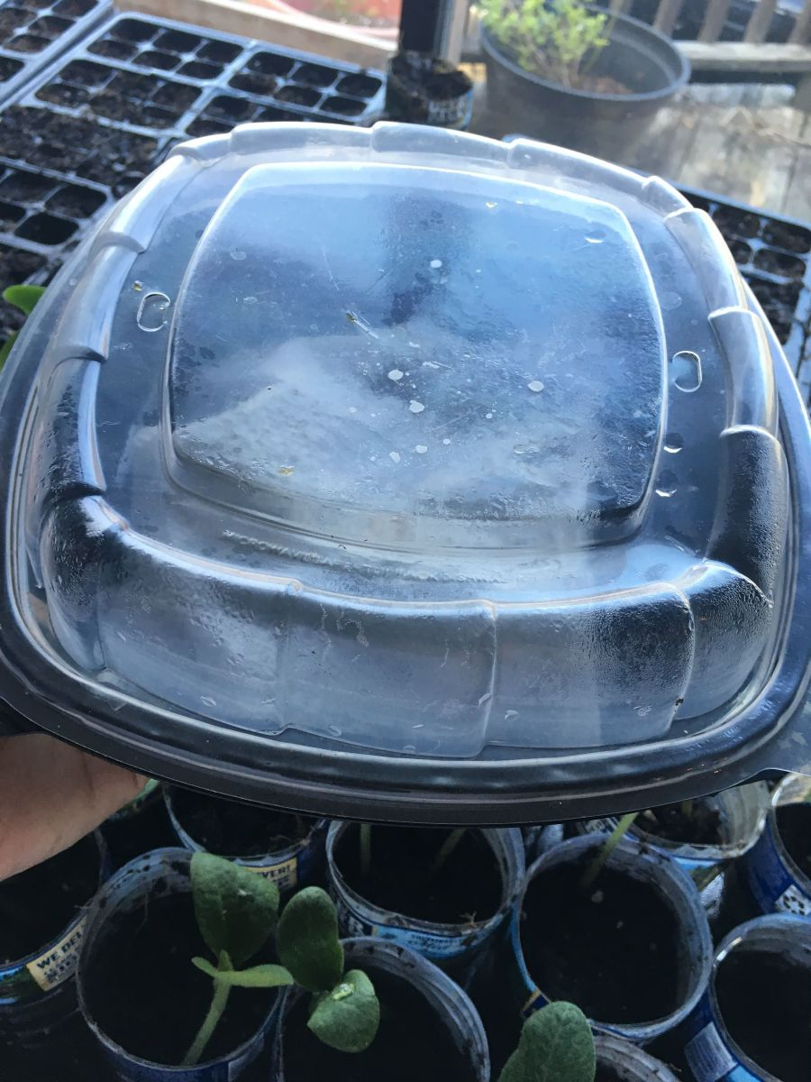 """My Olive Garden Plastic Container """"Greenhouse"""""""