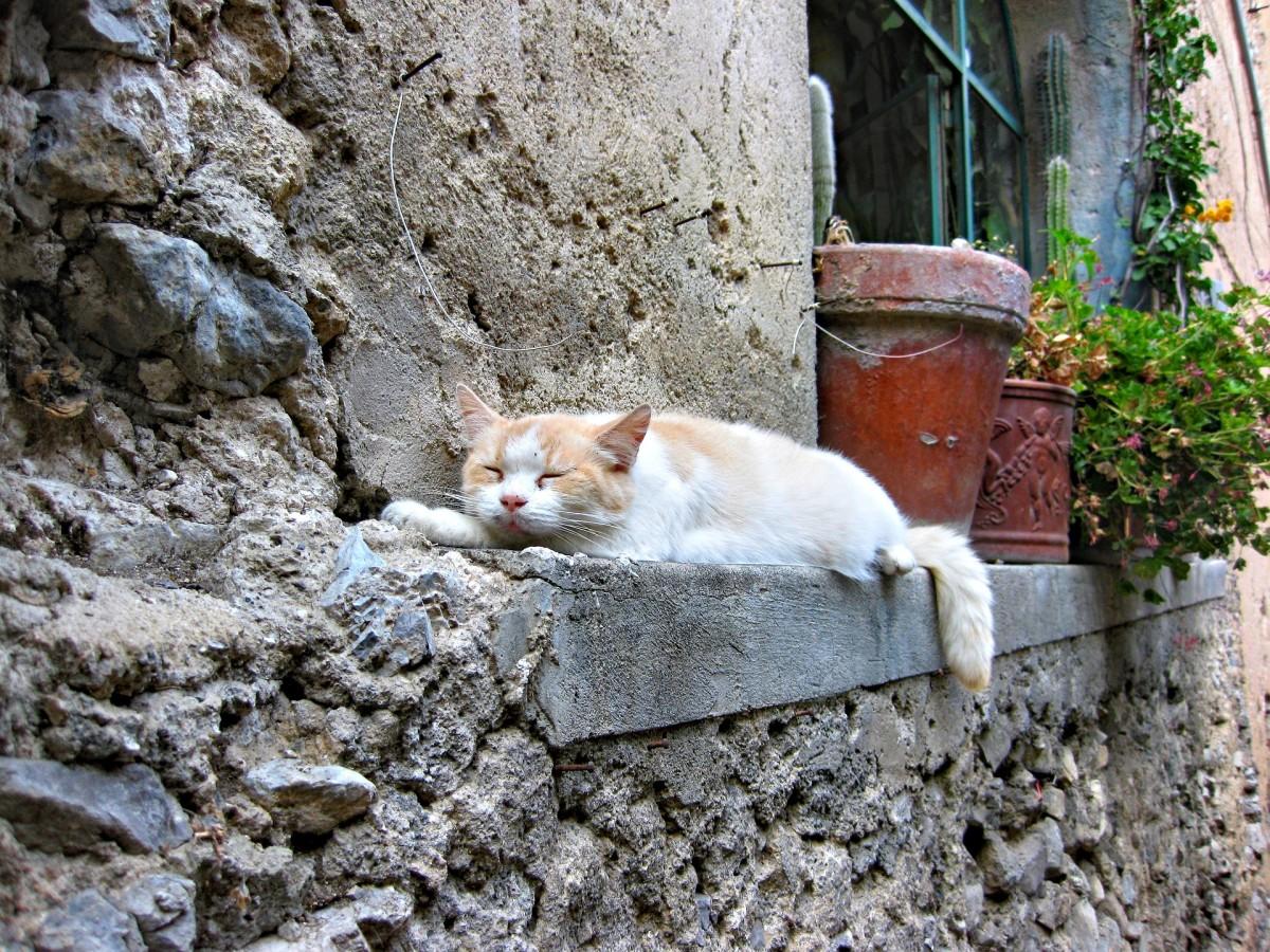 A Roman cat, sleeping off a large dinner of tripe.