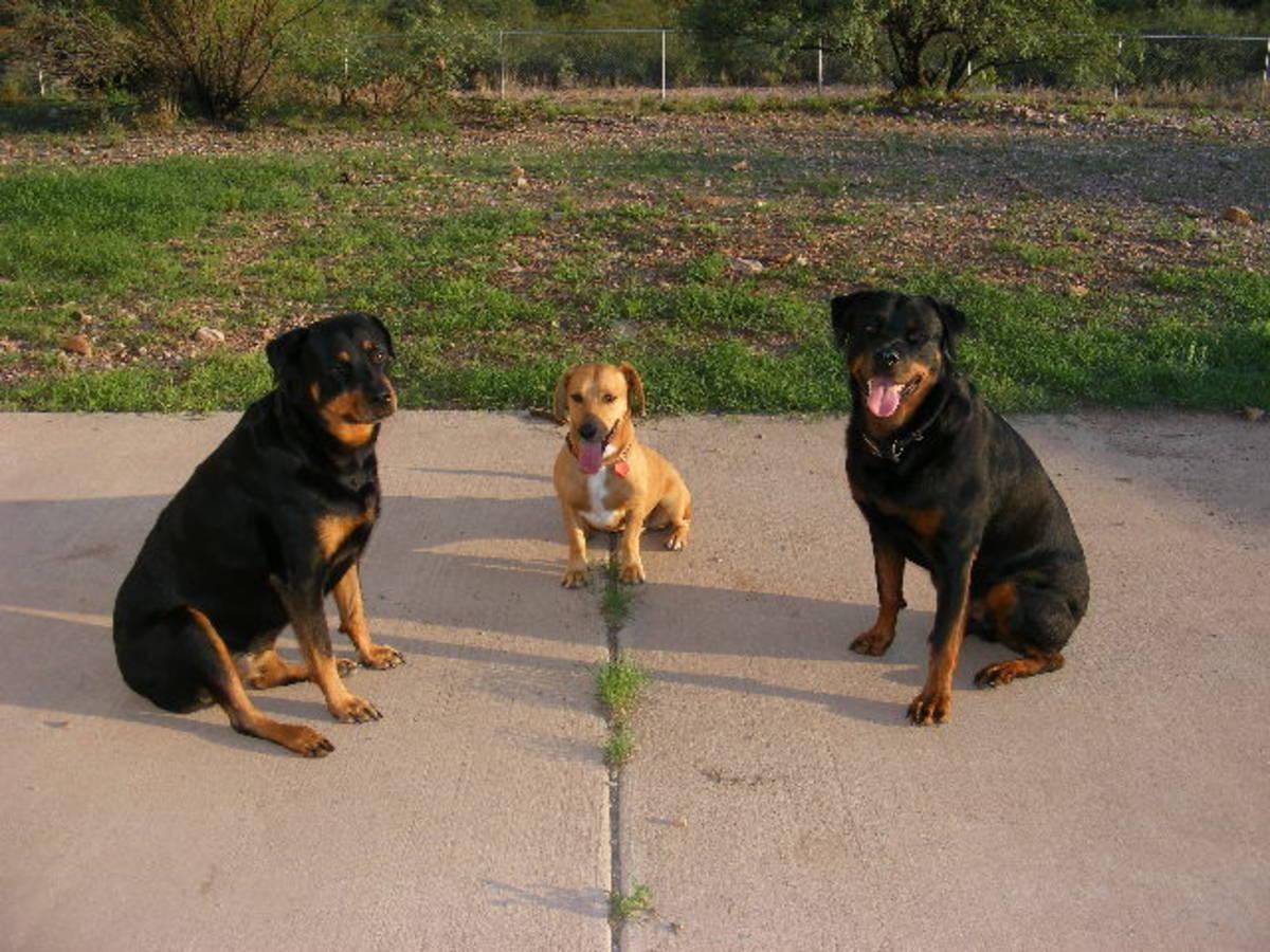 Understanding Stimulus Control in Dog Training