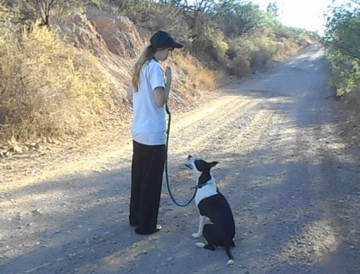 Keep your dog under stimulus control!