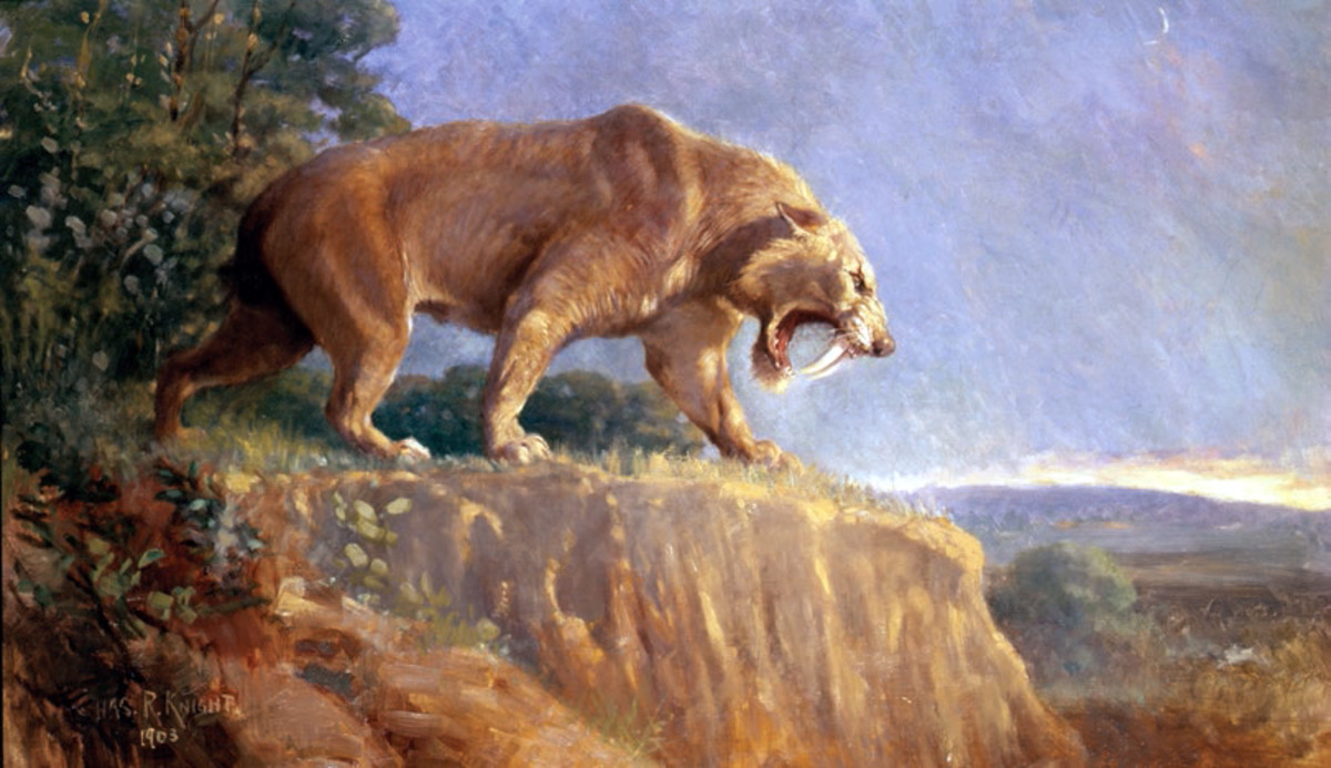 This painting is considered to be an accurate restoration of Smilodon.