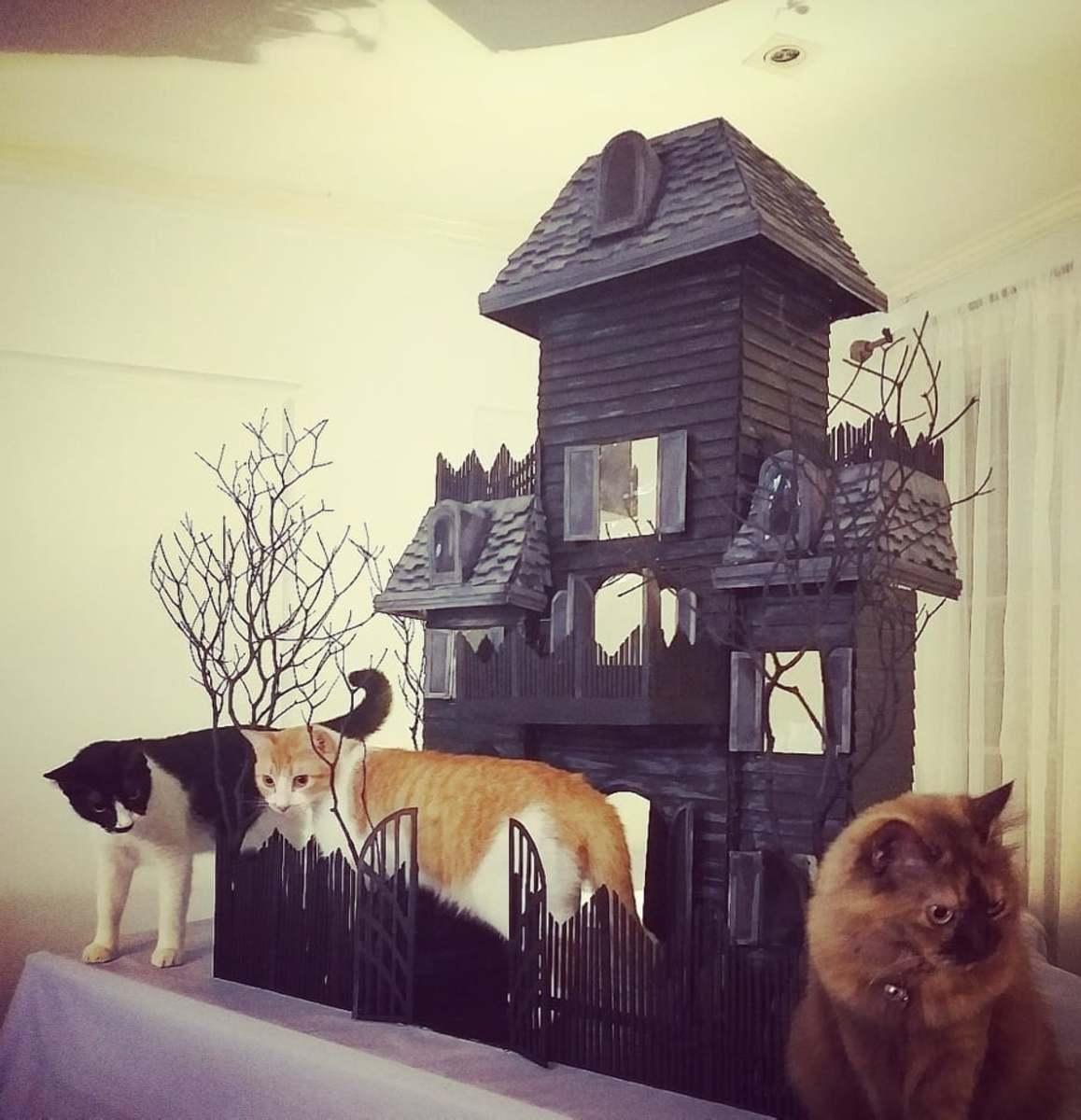 The Kitty Creepy Manor