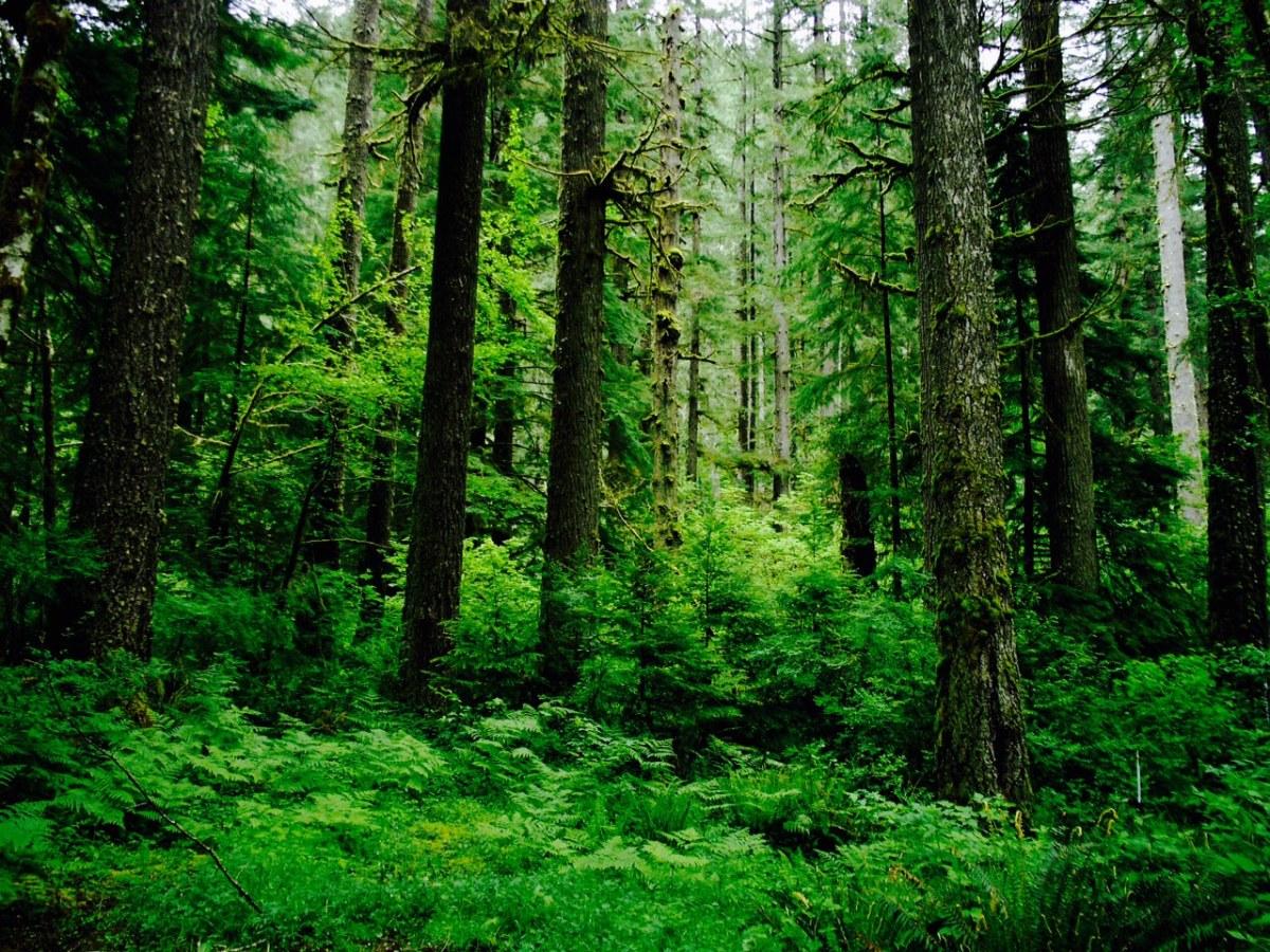 perfect-evergreen