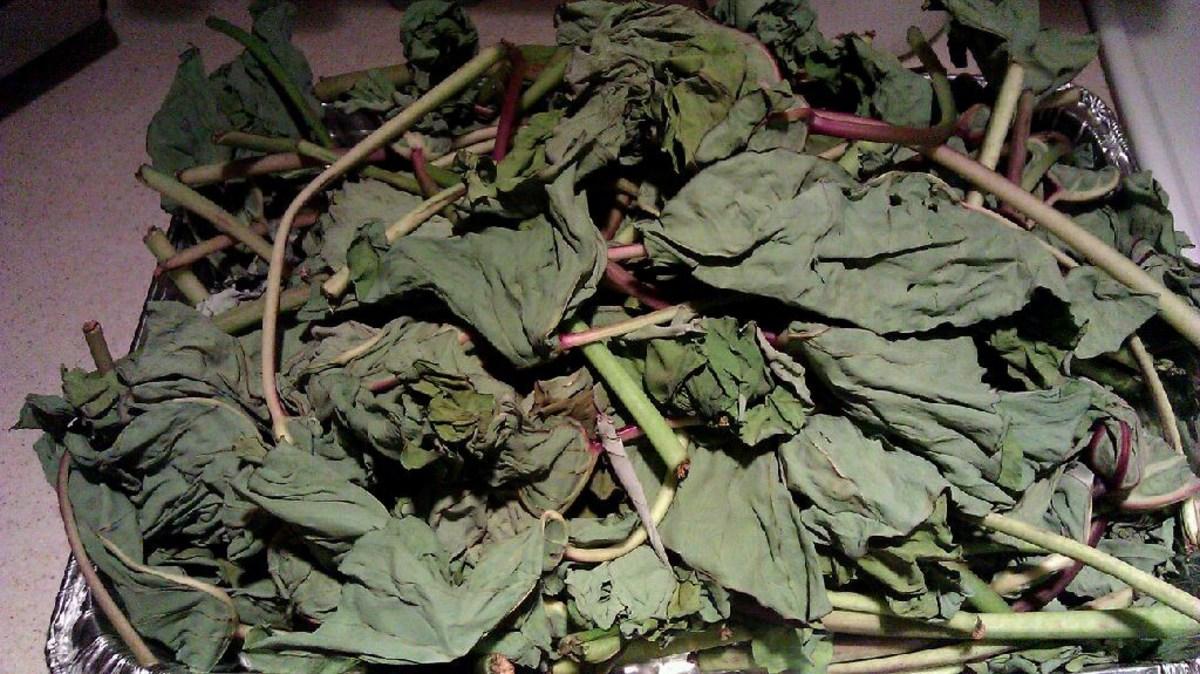 Dried taro leaves