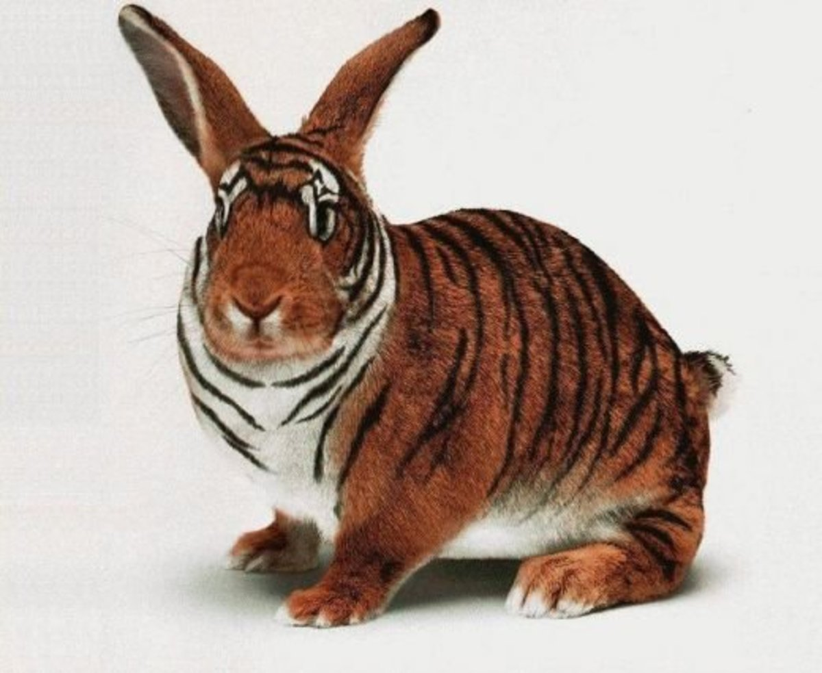 how-to-trim-rabbit-claws-and-stay-alive