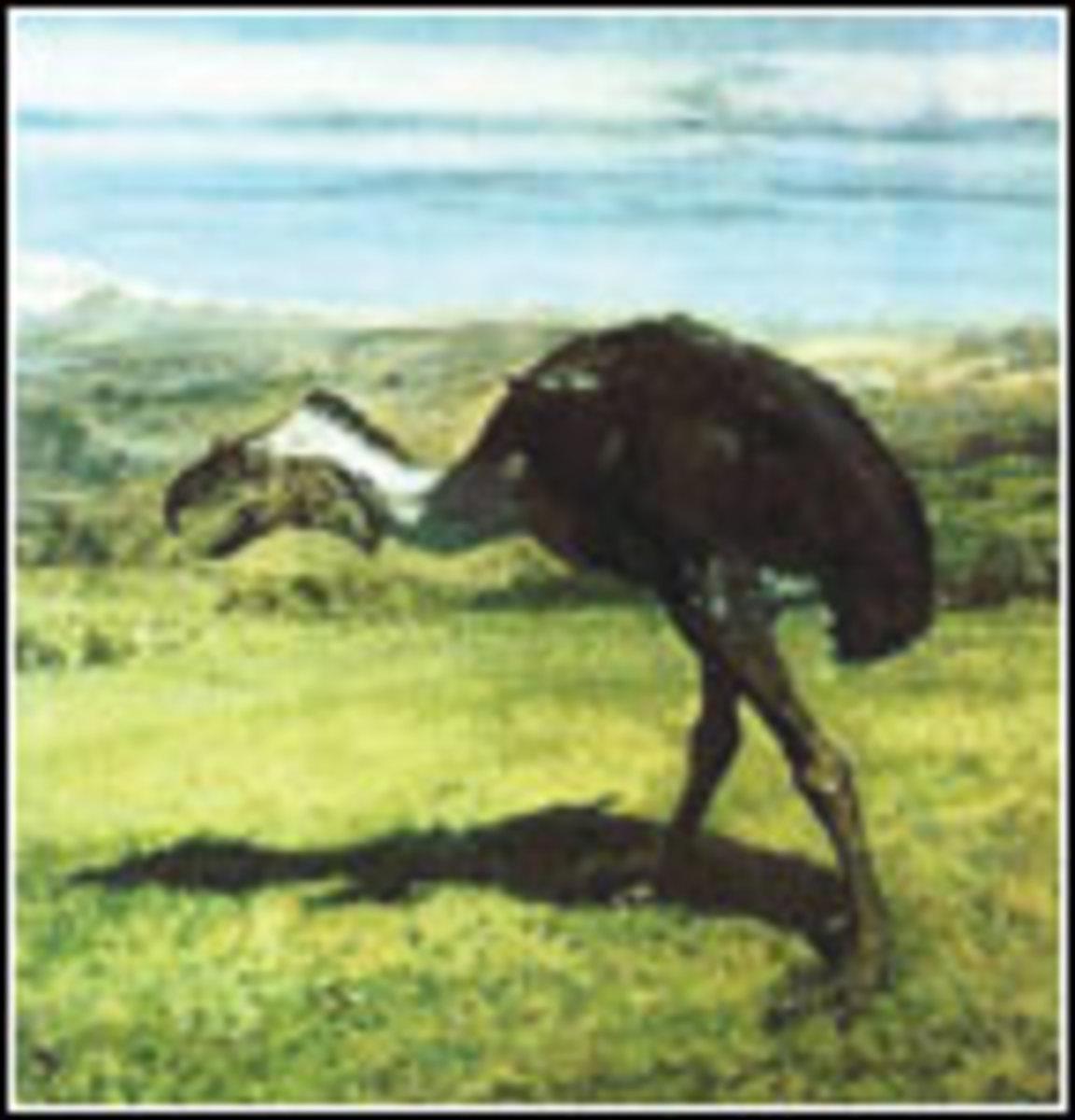 ...птицы Южной Америки форораки, жившие с олигоцена до