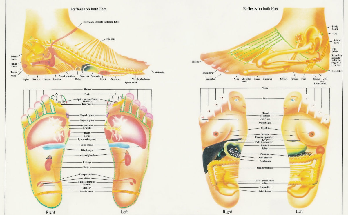 Here's a very detailed explanation of the Reflexology Chart -- practitioners believe that 7200 nerve endings in the foot correspond to many different areas and regions of the body (Created by: Chris Stormer  www.alwaysb.com)
