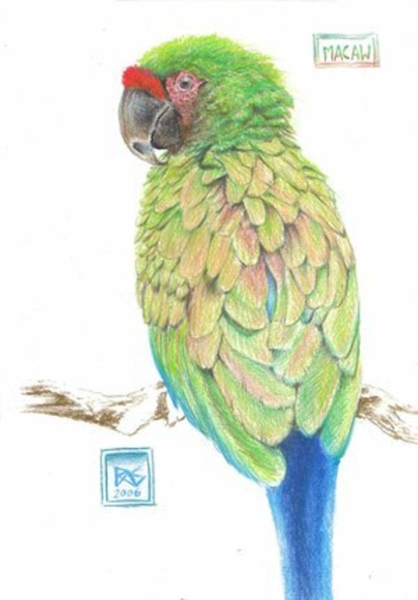 Macaw by Robert A. Sloan