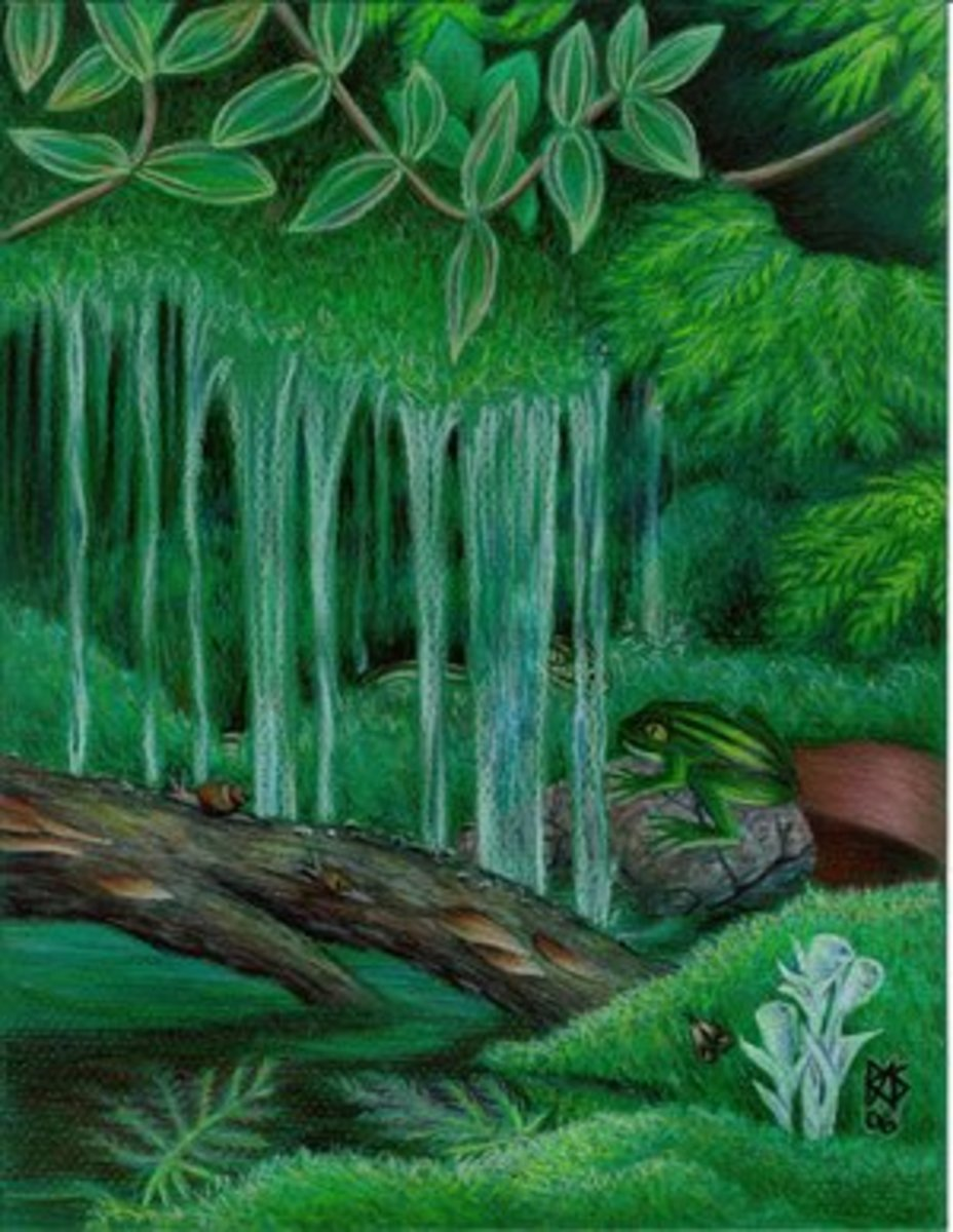 Ferns, Moss and Water by Robert A. Sloan is a textureless colored pencil painting done on bright green Canson Mi-Tientes paper with Prismacolor Premier colored pencils.