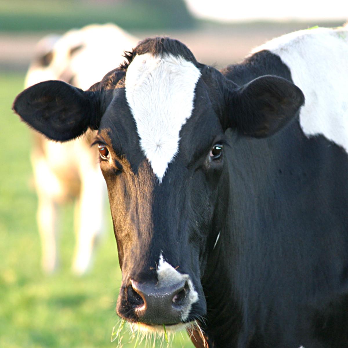 Organic vs. Regular Milk--Is It Worth Your Money?