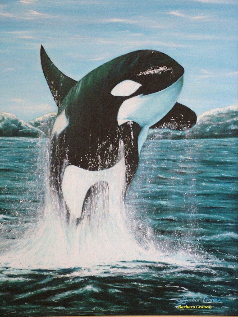 Killer Whales: Interesting and Fun Facts, Videos, Photos, and Links About Orcas