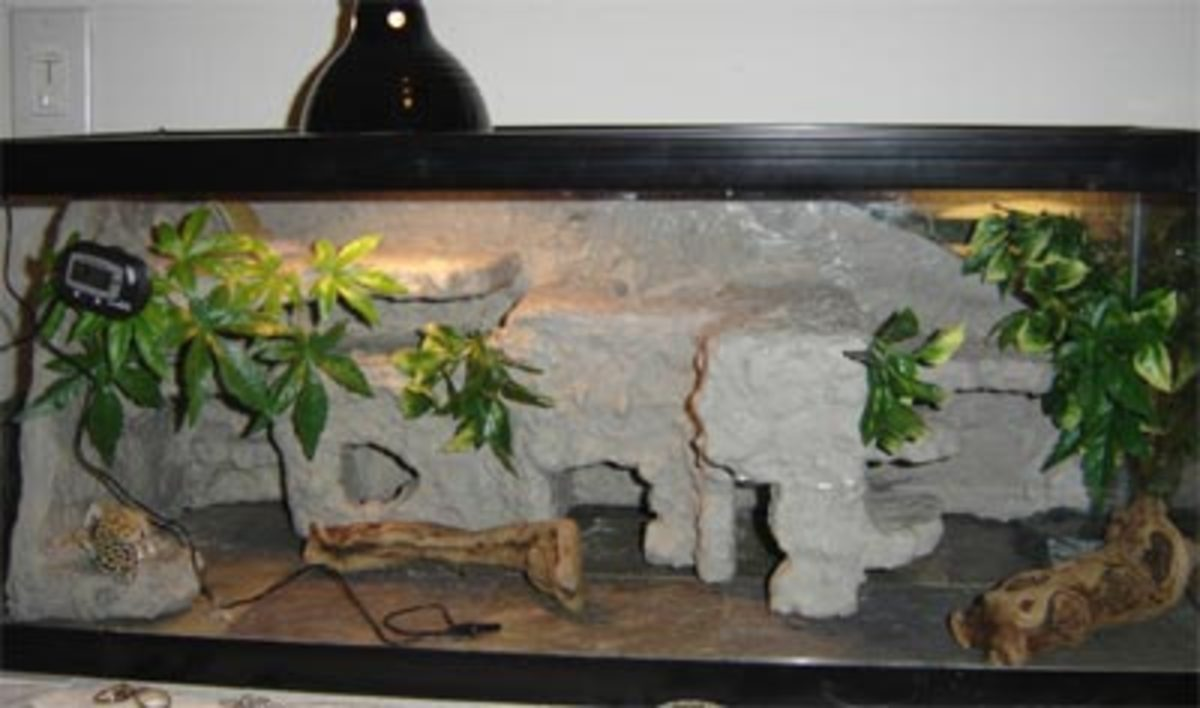 Fake Rock Instructional For A Reptile Enclosure Hubpages
