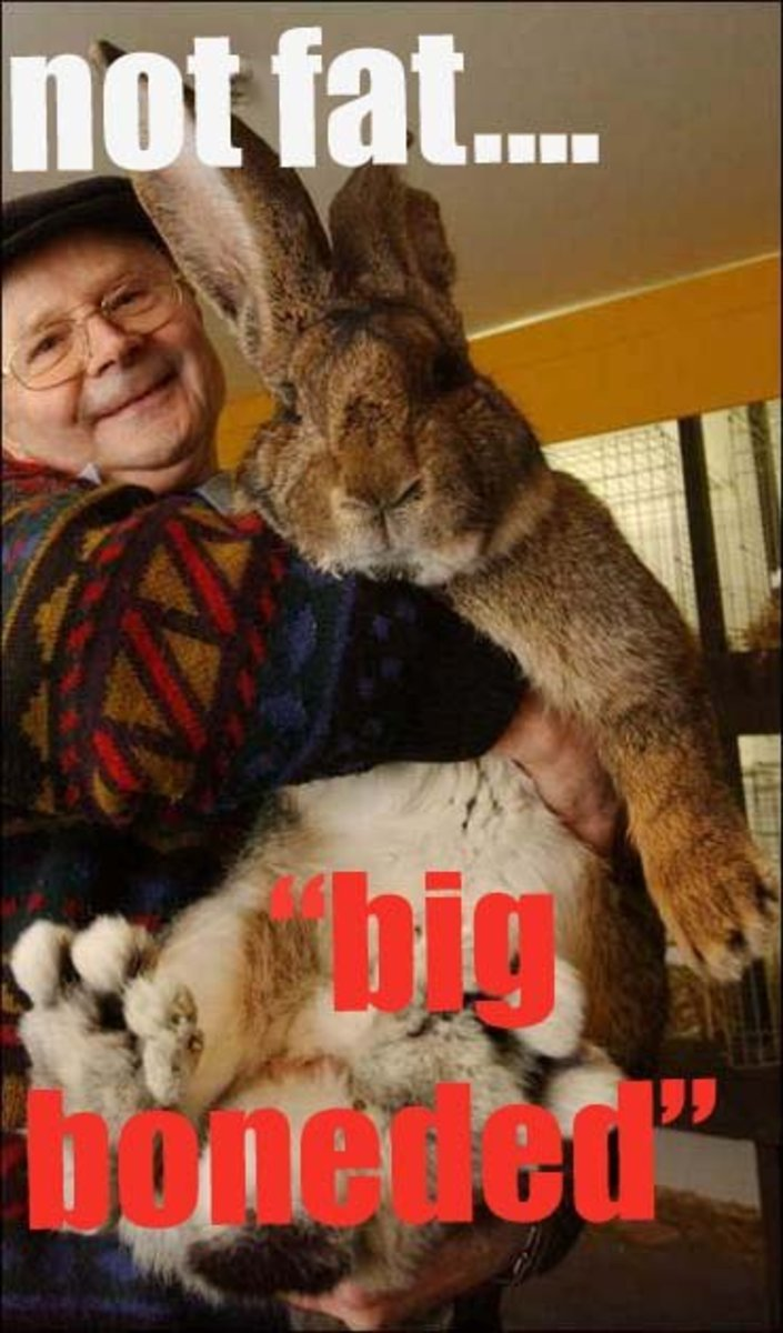 Bunny Breed Guide Flemish Giant Rabbit Hubpages