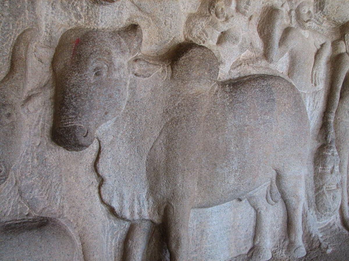 Hindu cow releif.