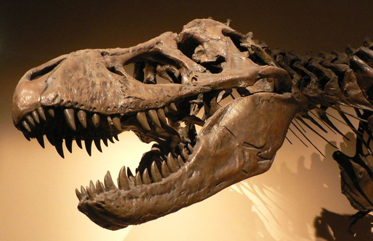 Cloning Dinosaurs May Be Possible