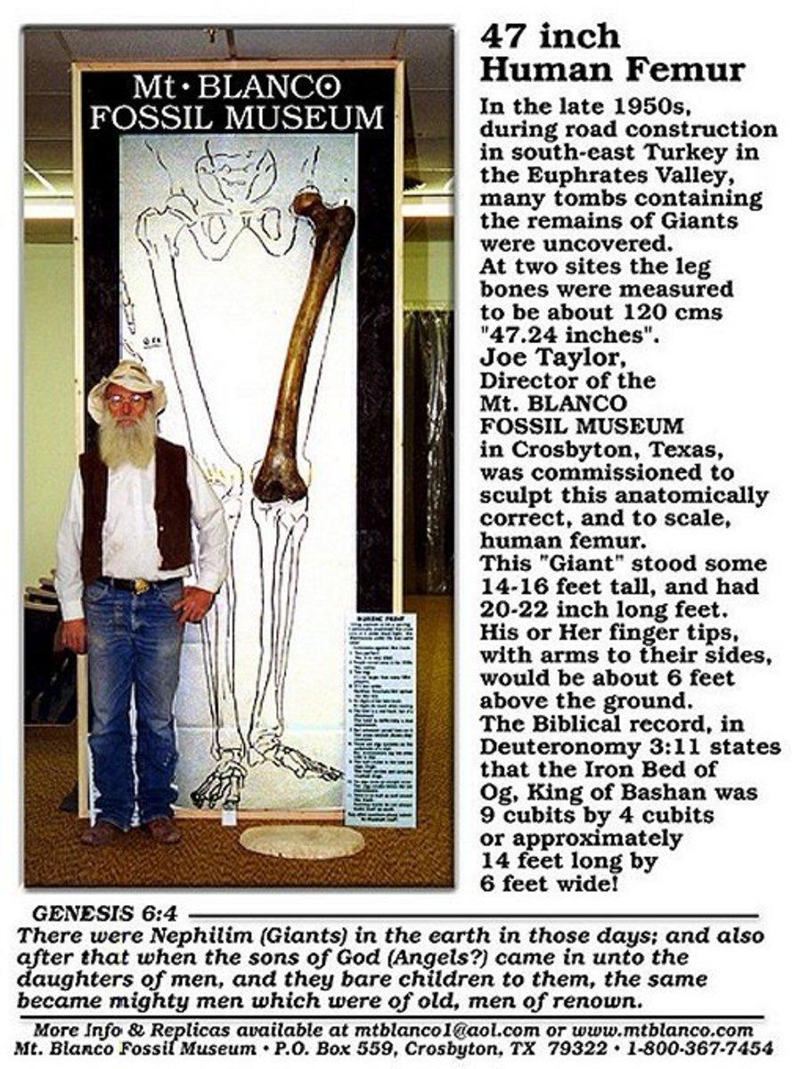 Mt Blanco Fossil Museum Giant Femur