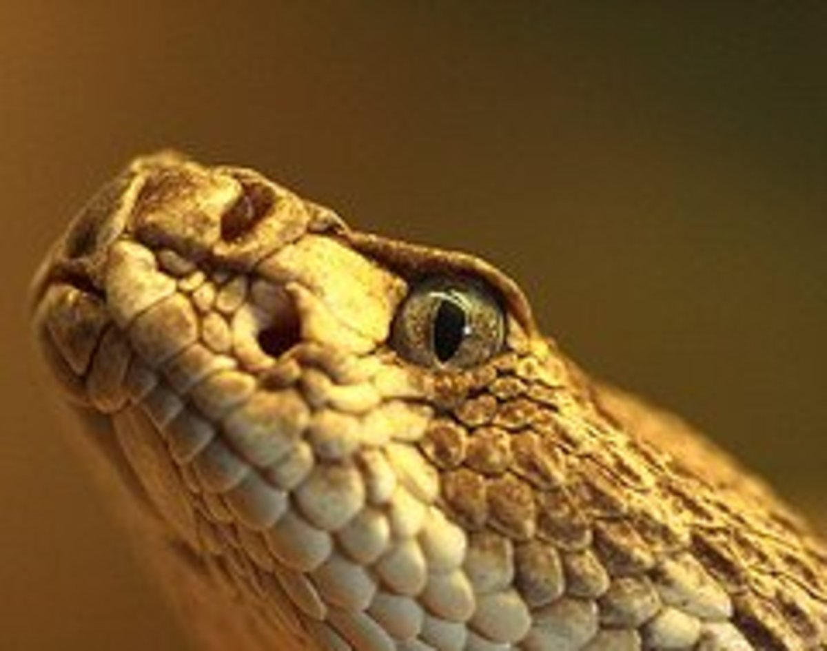 Rattlesnakes are delicious in recipes