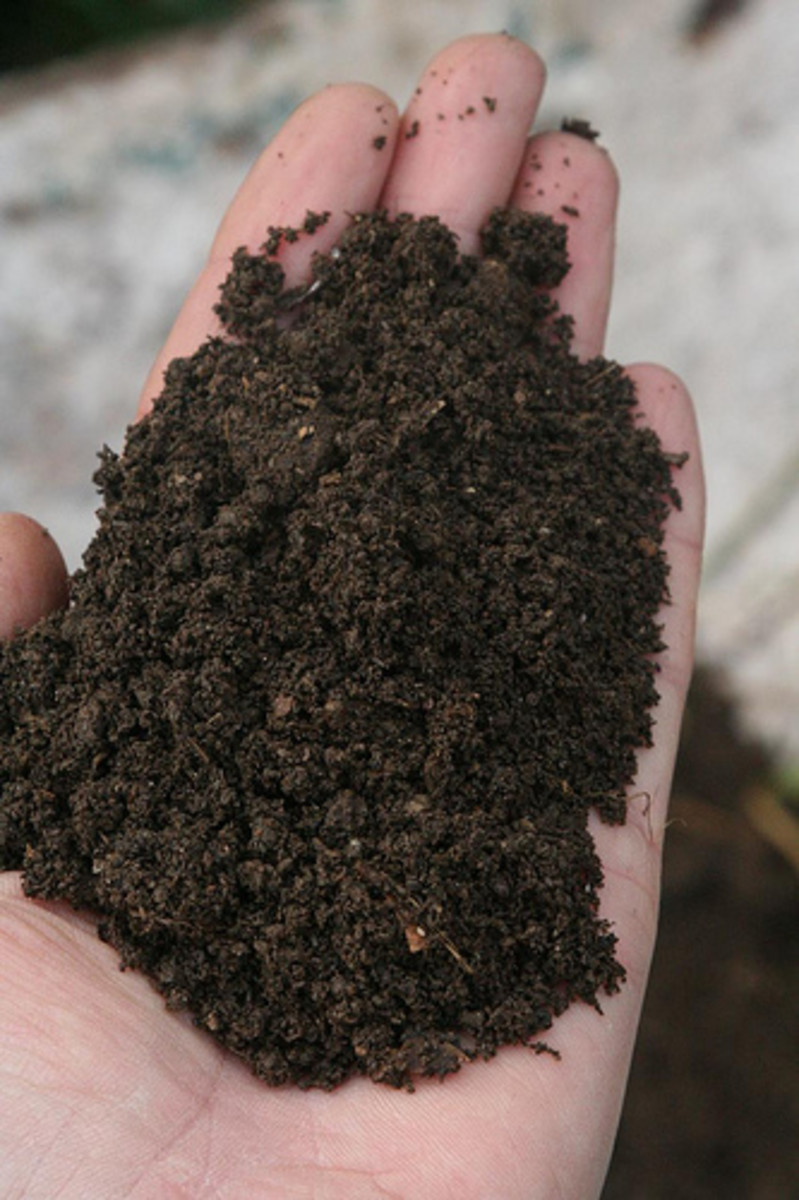 Easy Ways To Improve Your Soil
