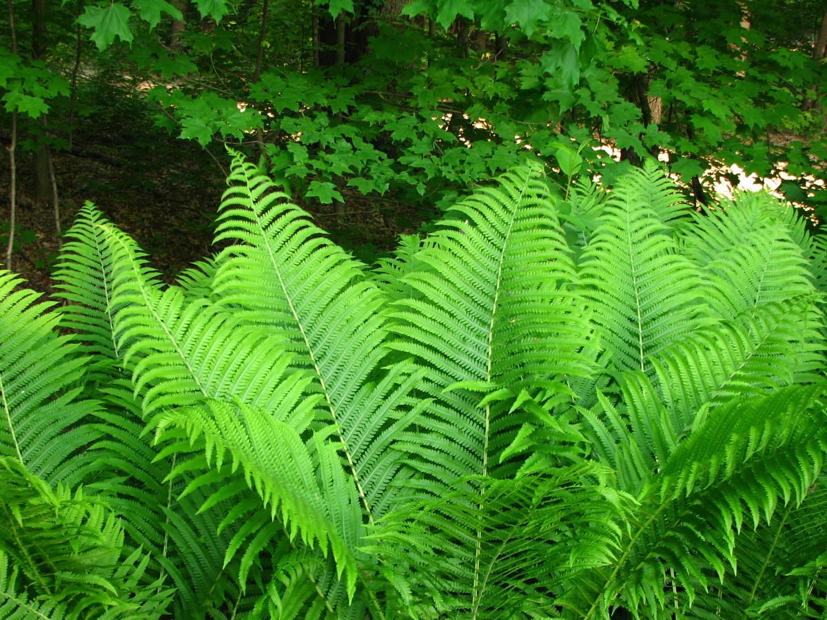 plants-for-wet-soil