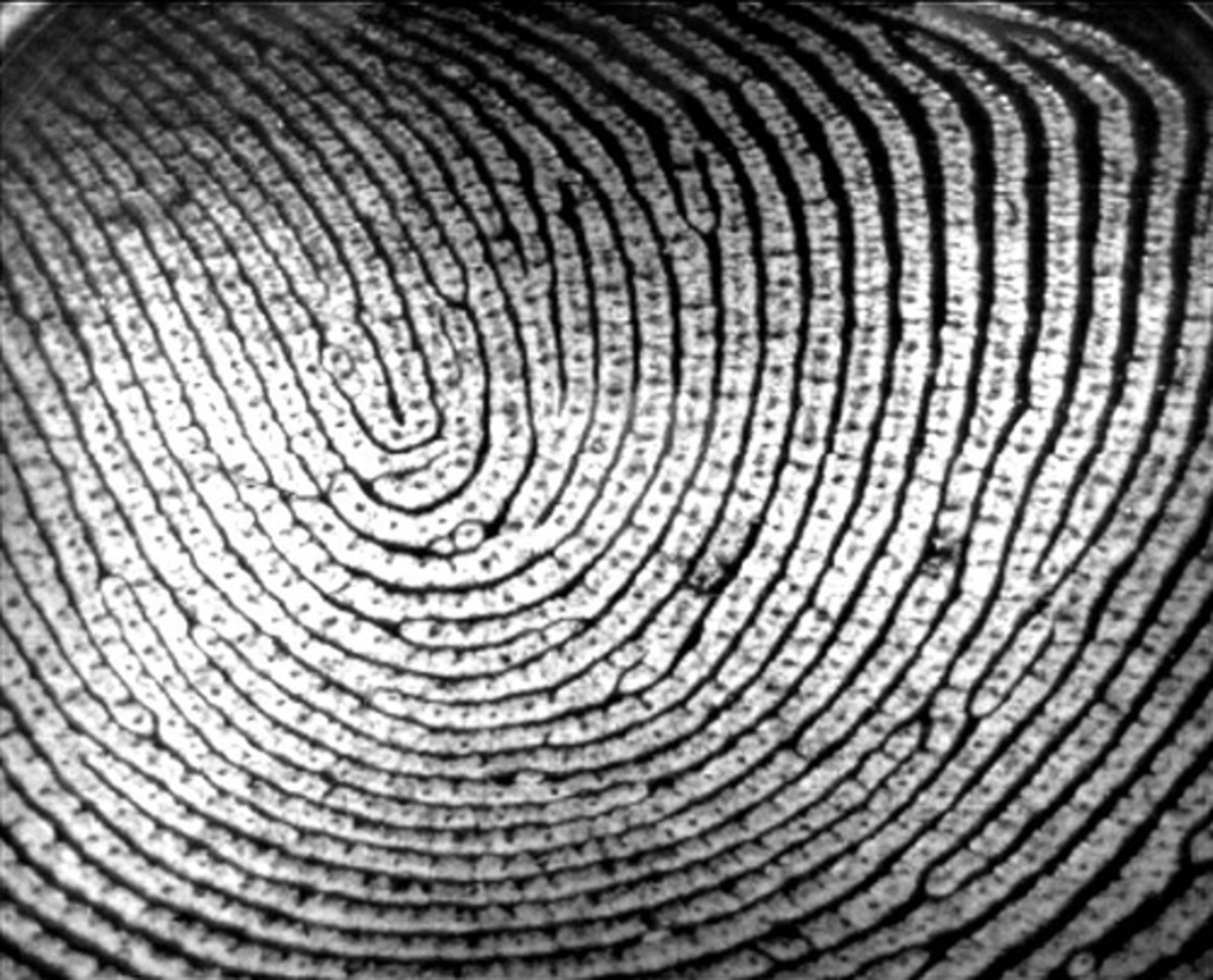 How to Create a Fingerprint Science Fair Project