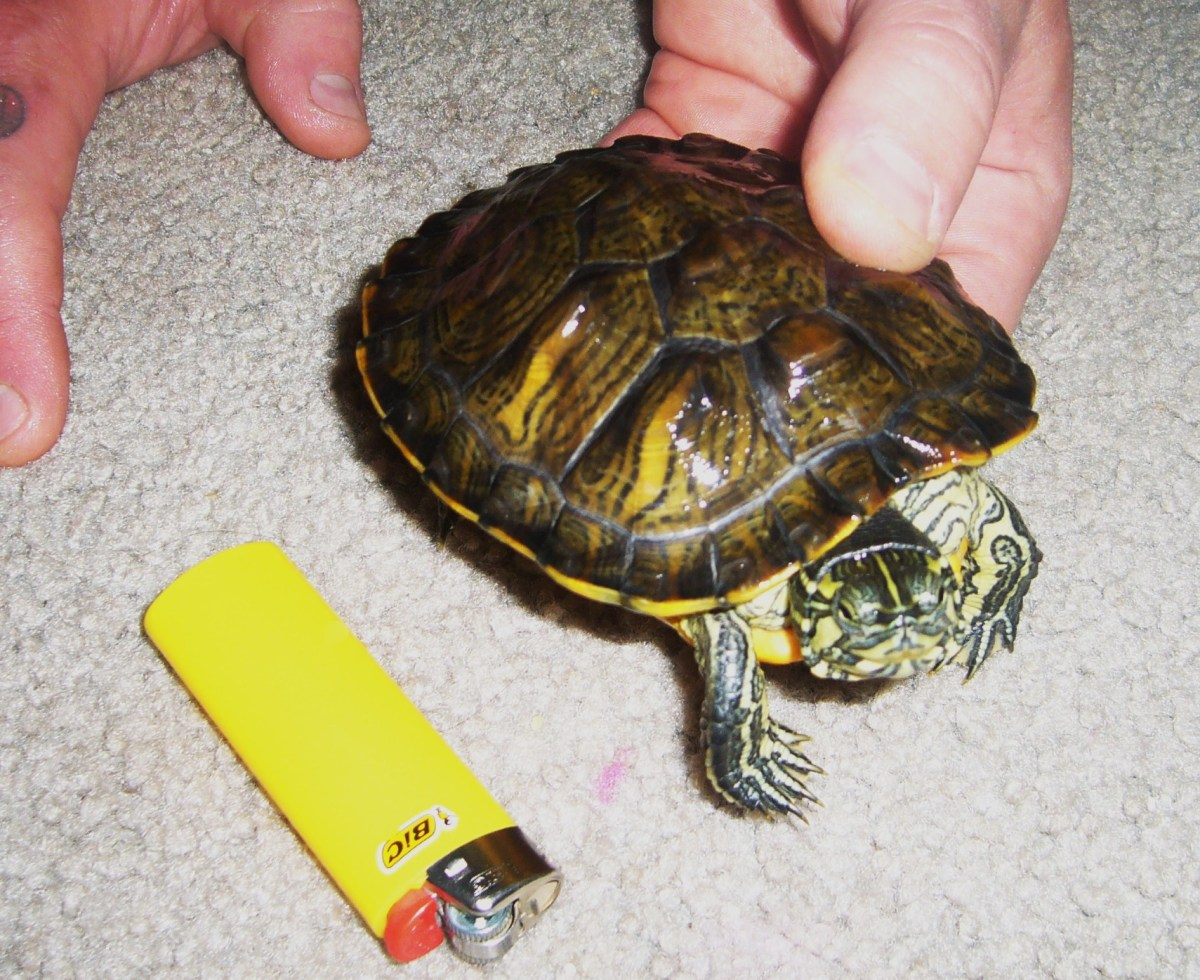 *****A lighter to show her size*****