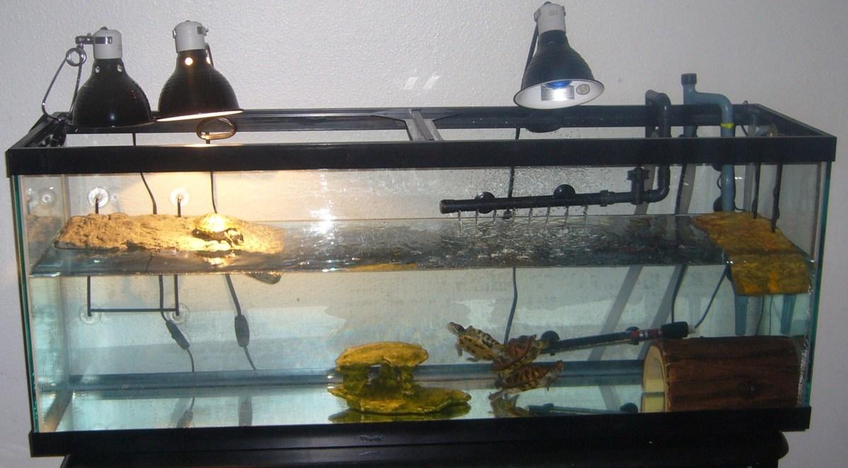 Lovin' their new tank