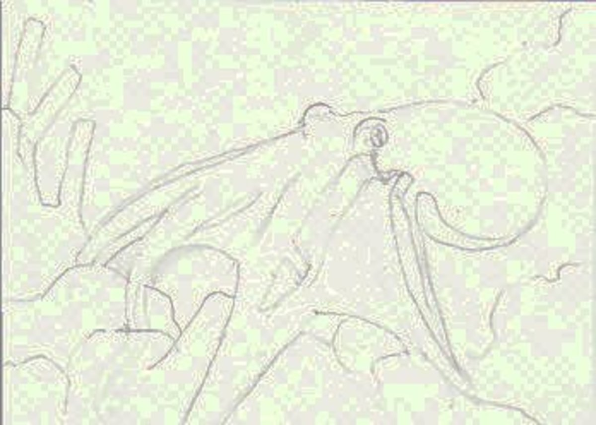 The Octopus Sketch -- permission granted to trace or copy for use in your drawing or painting.