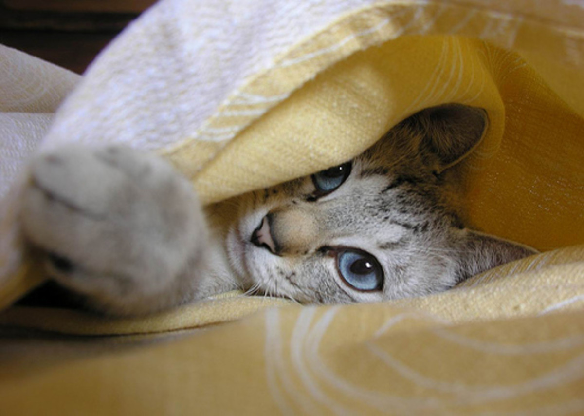 This picture was sent in by Jen (InspirePub) Although this is not her cat, we felt this cutie deserved an honorable mention.