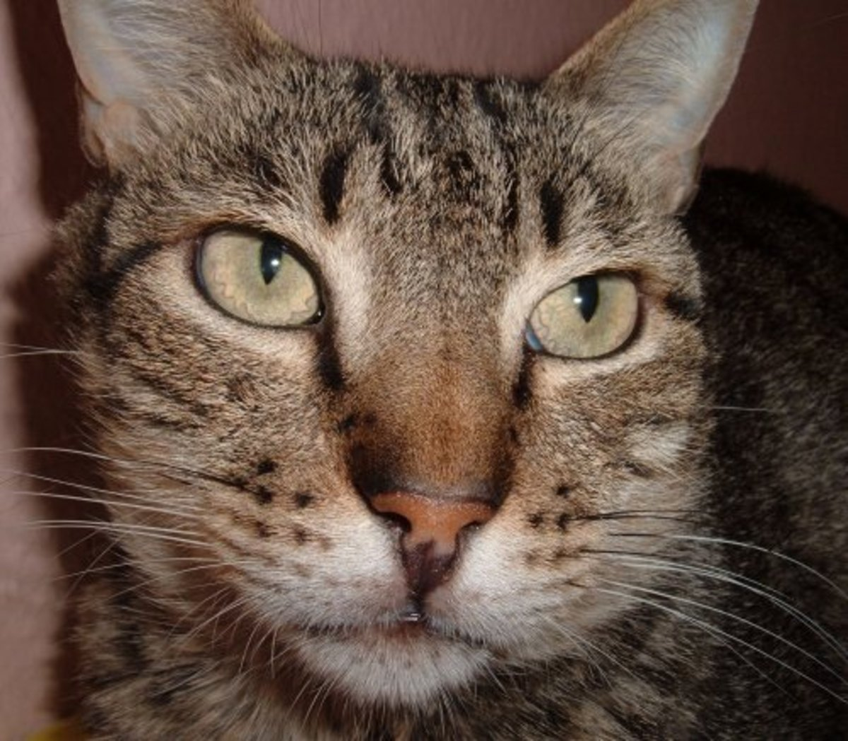 Can't you just see the wisdom in those eyes! Ely's cat definitely has it going on.