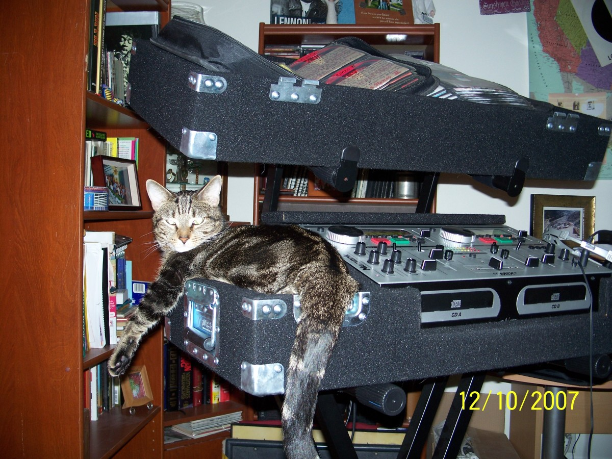 There's nothing sexier than a cool cat named Leopold that can bring home the bacon and spin disks at the same time.... (photo courtesy of DJ Funktual)