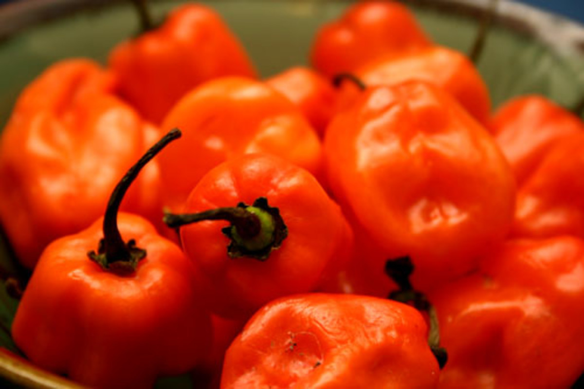 Fire-Roasted Habanero Hot Sauce Recipe, Extra-Spicy