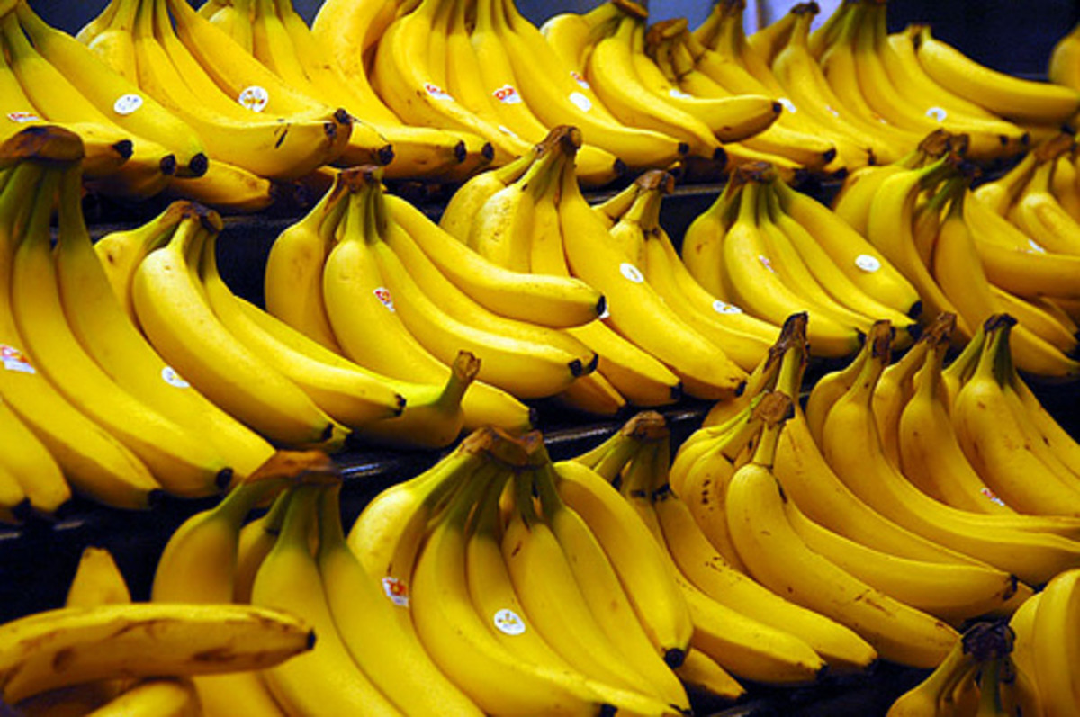Ripe Cavendish Bananas (Photo courtesy by Steve Hopson from Flickr)