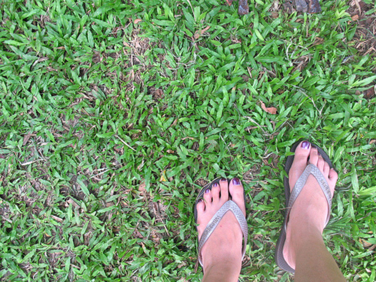 Carabao grass is drought-resistant. (Photo courtesy by psycherika from Flickr)