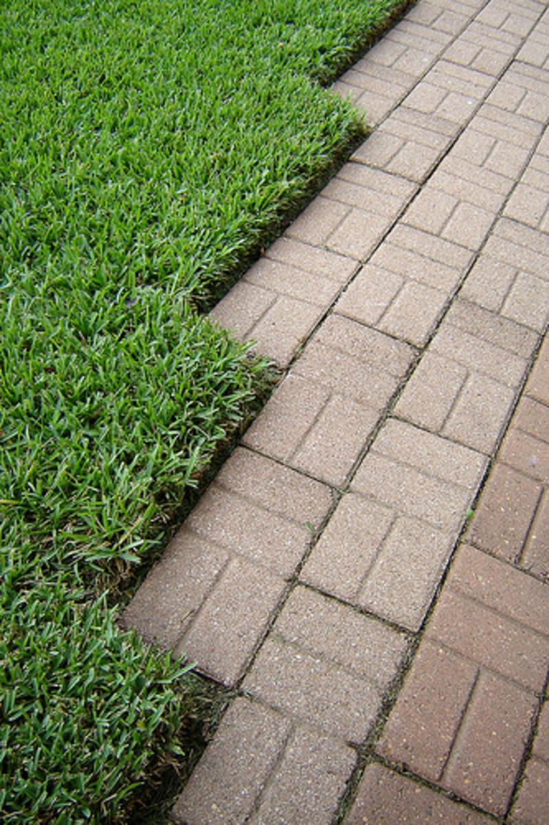 Zigzag Grass (Photo courtesy by Andreanna Moya Photography from Flickr.com)